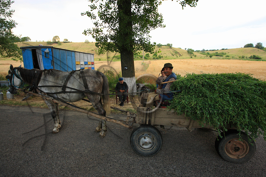 On the road to the village of Ciucurova, a farmer, Costantin Banui, has stopped his cart near the beekeepers' trailer to buy a jar of honey.