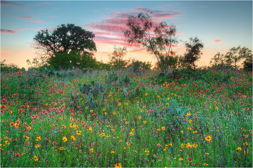 In the Texas Hill Country, this Texas Wildflower image comes from Llano County where the firewheels and greenthread had a nice bloom. The bluebonnets had faded, giving way to the reds and golds of a tranquil field of color.
