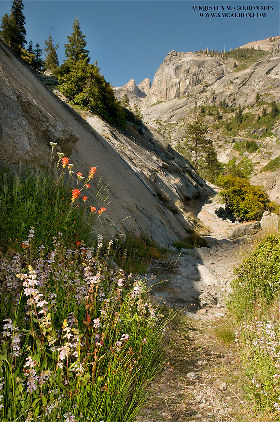 Wildflowers and fantastic views abound on the 72 mile High Sierra Trail in Sequoia National Park
