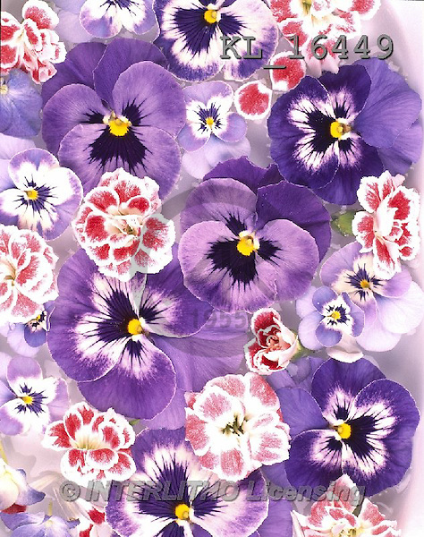 Interlitho, FLOWERS, BLUMEN, FLORES, photos+++++,pansies, cloves,KL16449,#F#