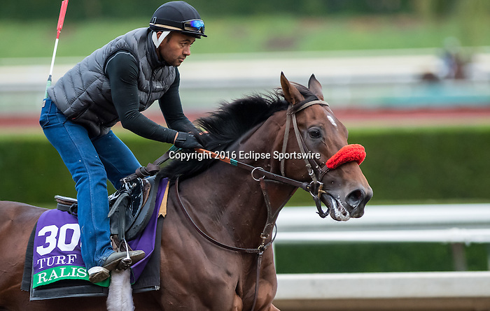 ARCADIA, CA - OCT 31: Ralis, owned by Reddam Racing, LLC and trained by Doug F. O'Neill, exercises in preparation for the Breeders' Cup Longines Turf at Santa Anita Park on October 31, 2016 in Arcadia, California. (Photo by Douglas DeFelice/Eclipse Sportswire/Breeders Cup)