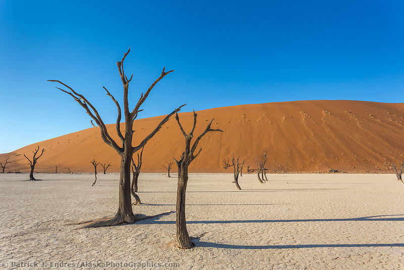 Deadvlei, Dead Acacia trees in an old clay pan, Namib-Naukluft National Park, Namibia