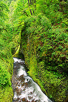 Oneonta Gorge from the Horsetail Falls trail, Columbia River Gorge National Scenic Area, Oregon