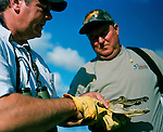 Don Hampton of H&H Gator Hunt traps gators on a lake on a farm in Malabar, Florida. Don is a police officer for the Malabar city police department.