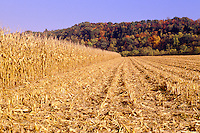 Field of corn half harvested and colorful hillside behind,