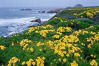 Giant coreopsis and Destroyer Rock<br />