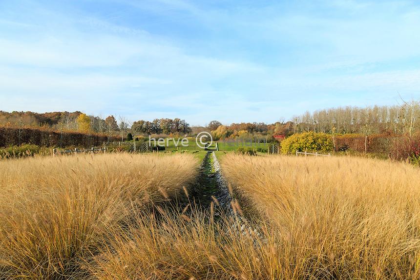 France, Loiret (45), Varennes-Changy, le Jardin des Arbres, massif de graminées (Pennisetum) // France, Loiret, Changy,  Garden of Trees, grasses (Pennisetum)