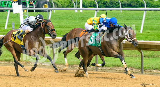 Sonora winning at Delaware Park on 8/12/17