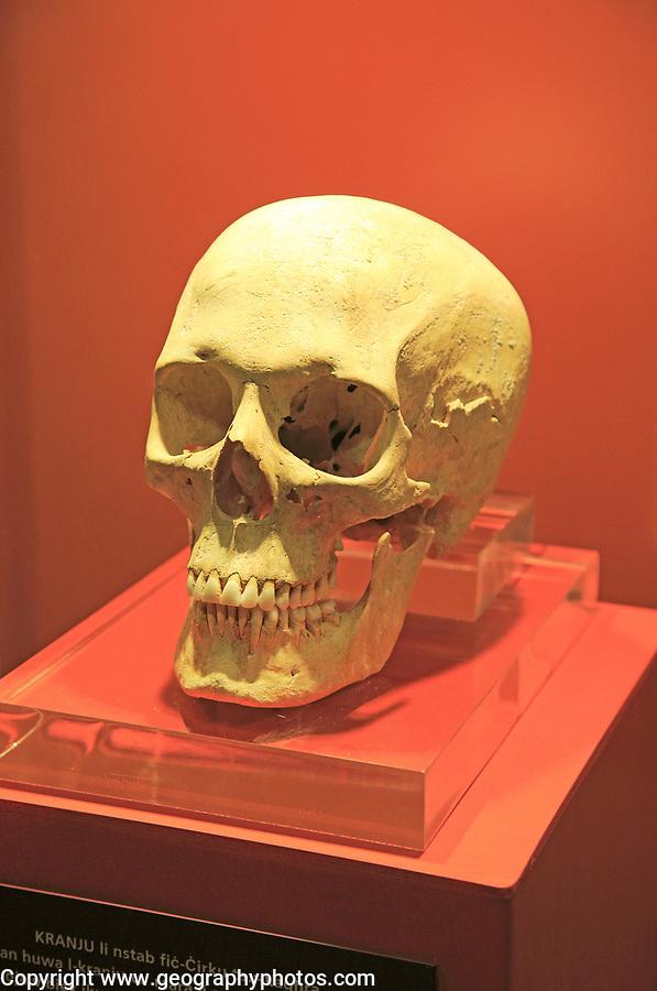 Ggantija temples visitor centre display museum, Gozo, Malta skull of neolithic adult female