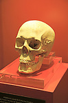 Ggantija temples visitor centre display museum, Gozo, Malta skull of neolithic adult female