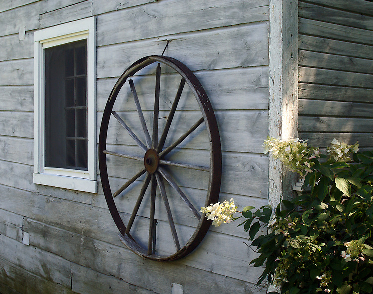An antique wagon wheel hangs on the side of a gray, wooden barn flanked by a white washed window and a green shrub with white flowers. Typical old fashion scene giving serenity and nostalgia to the viewer.