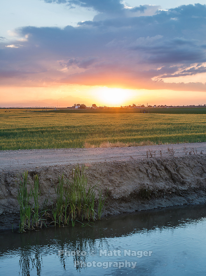 Brantner ditch carries water at Sakata Family Farms in Brighton, Colorado, Thursday, June 19, 2015. Sakata Family Farms grows onion, barley, broccoli, sweet corn and cabbage.<br /> <br /> Photo by Matt Nager