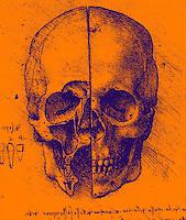 Leonardo Da Vinci skull drawing