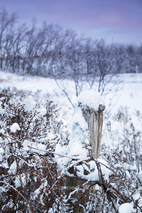 Fence in Snowy Field in Late Afternoon