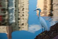Goiania_GO, Brasil...Parque Bosque dos Buritis em Goiania, Goias. Na foto uma garca...Bosque dos Buritis Park in Goiania, Goias. In this photo a crane...Foto: BRUNO MAGALHAES / NITRO