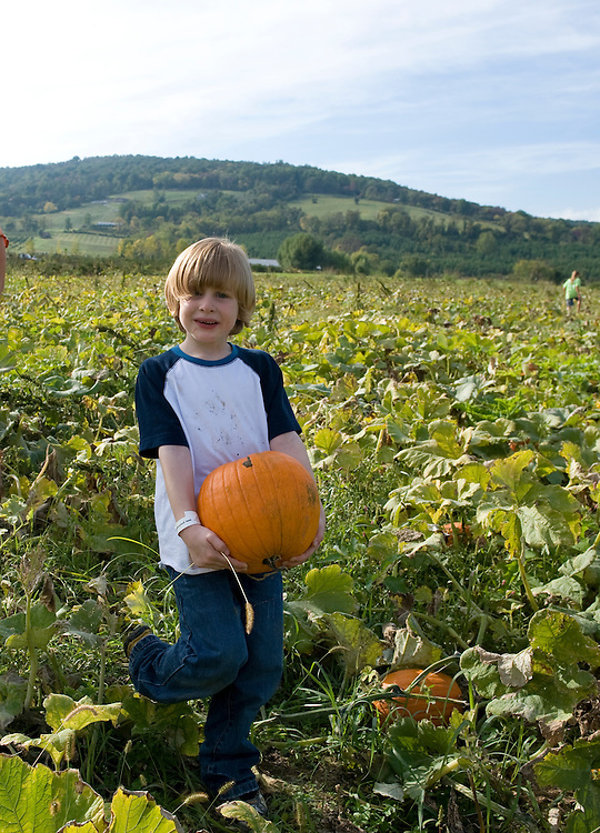 Aidan Quillen carries his pumpkin at Great Country Farms in Loudoun County Virginia on October 9, 2008. Great Country Farms has the largest u-pick pumpkin patch in Loudoun and they also offer hay rides and many activities for children.