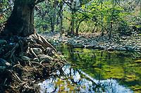 Fluss mit alten Bäumen in der Sierra Gorda, Mexiko, Nordamerika