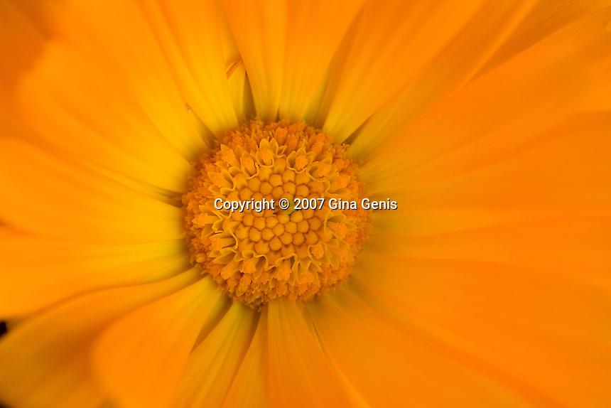 Close up of an orange flower