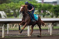 05-02-17 Hong Kong Grades Stakes Day works Sha Tin Hong Kong