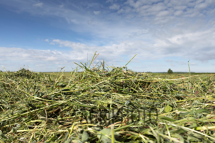19.5.2020 Italian, Rye grass  silage in Rutland <br /> ©Tim Scrivener Photographer 07850 303986<br />      ....Covering Agriculture In The UK....