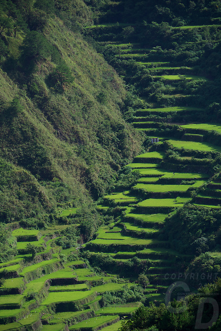 Sagada/Bontoc Rice terrasses Philippine Mountain Province