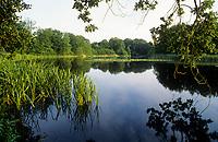 Methorst-Teich, Methorstteich, Methorster Teich, Naturschutzgebiet, Naturpark Westensee, Schleswig-Holstein, Norddeutschland, Deutschland