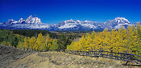 Teton Range and fence line fall colors, Grand Teton NP,Wyoming, USA
