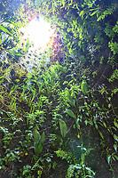"""Festival International des Jardins à Chaumont-sur-Loire.<br /> Thème de l'année 2009, """"Jardins de couleur"""".<br /> Création de Patrick Blanc : une feuille géante s'enroulant sur elle-même jusqu'à constituer une grotte secrète, ouverte sur le ciel."""
