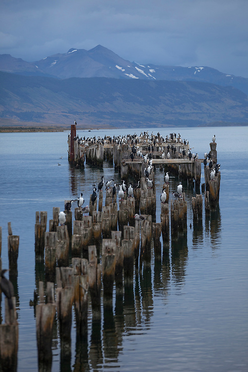 The town of Puerto Natales sits on the Last Hope Sound with the remnants of a wood pier covered with cormorants