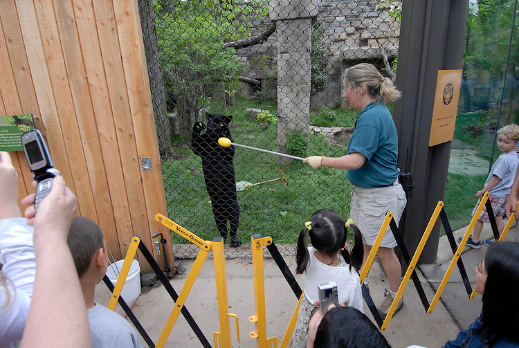 Philadelphia Zoo, Big Cat Falls, trainer working with young black panther..Philadelphia, Pennsylvania, PA USA.  Photo copyright Lee Foster, 510-549-2202, lee@fostertravel.com, www.fostertravel.com. Photo 252-30642