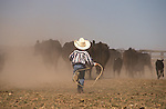 Young boy with rope chasing cattle during round-up at Nyman brothers ranch near Crane, southeastern Oregon.