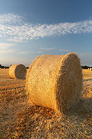 Round bales of Barley straw<br /> &copy;Tim Scrivener Photographer 07850 303986<br />      ....Covering Agriculture In The UK....
