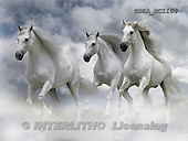 Bob, ANIMALS, horses, photos, GBLAEC1106,#A# Pferde, caballos