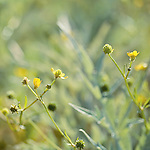 Little green and yellow plants with a bokeh background.