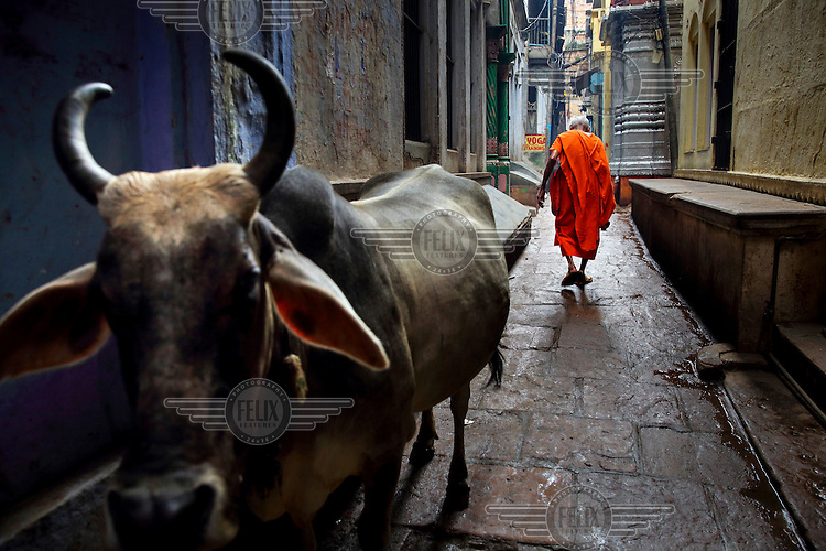 A cow and a monk pass each other in a narrow alleyway.