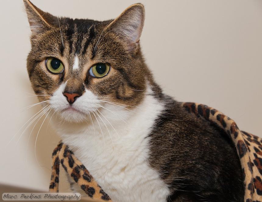 Cat Adoption Costa Mesa Ca