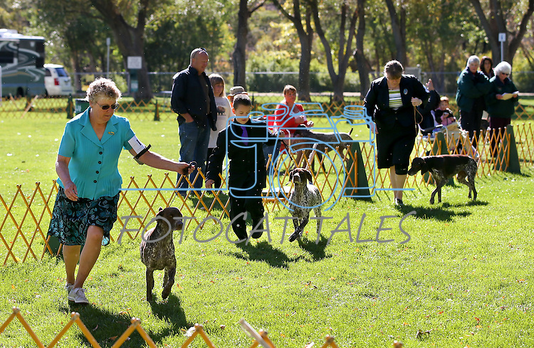 From left, Cindy Smullen, of Reno, Adam Hillyard, of Sparks, and Betty Weaver, of Mount Home, Idaho, compete in the German Shorthaired Pointer Club specialty event at the Bonanza Kennel Club of Carson City's 24th Annual Dog Shows and Trials at Fuji Park in Carson City, Nev., on Friday, Sept. 27, 2013. Nearly 800 dogs will compete in the event, which continues Saturday and Sunday and is free to the public. <br /> Photo by Cathleen Allison/Nevada Photo Source/Nevada Photo Source