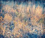 1.14.14 - Sunset Grass...