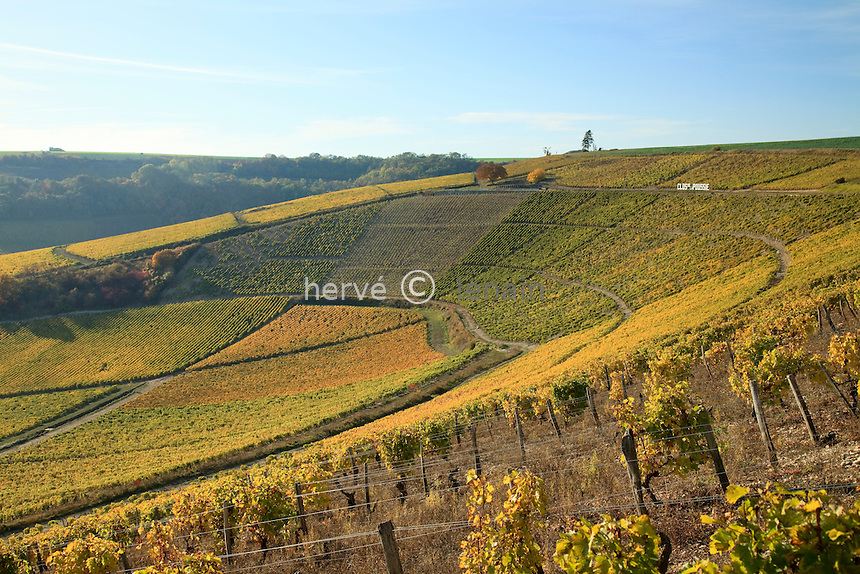 France, Berry, Cher (18), Sancerrois, Bué, le vignoble en automne après les vendanges, le cirque de la Poussie, vigne en A.O.C Sancerre // France, Berry, Cher , Sancerrois, the vineyards in autumn at the Cirque (circus) de la Poussie, vines in A.O.C. Sancerre