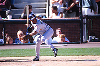 SAN FRANCISCO, CA - Rickey Henderson of the San Diego Padres in action during a game against the San Francisco Giants at Pacific Bell Park in San Francisco, California in 2001. Photo by Brad Mangin