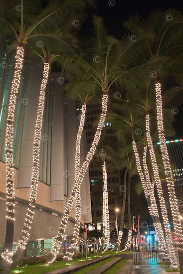 Palm Trees With Christmas Lights Honolulu O Ahu Photoshelter
