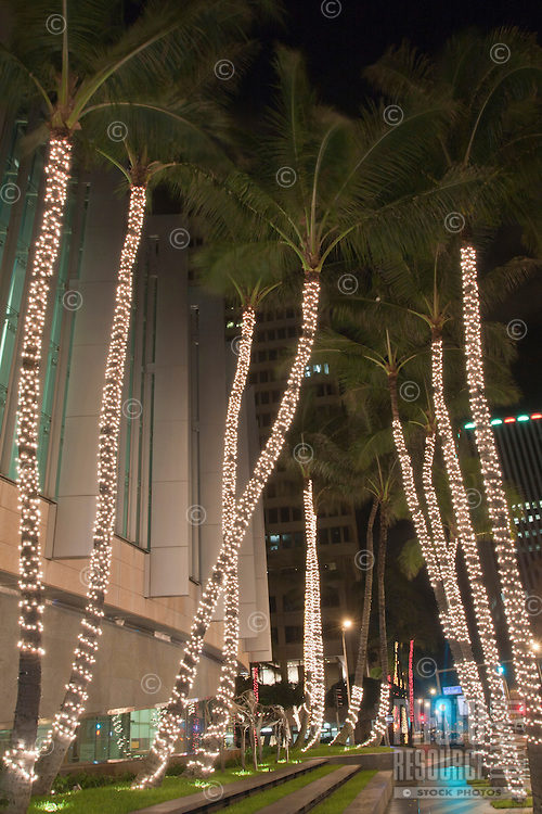Palm trees dressed up in Christmas lights in downtown Honolulu, O'ahu.