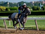 June 7, 2019 : Tacitus gallops on the main track as horses prepare for the Belmont Stakes on Belmont Stakes Festival Weekend at Belmont Park in Elmont, New York. Scott Serio/Eclipse Sportswire/CSM