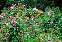 Blooming Rose Garden & birdhouses, New Jersey