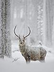 Highland Winter