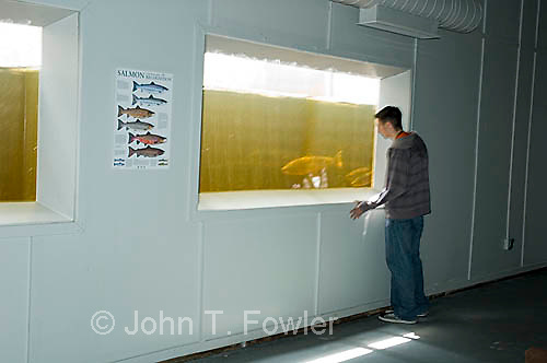 Viewing chambers, Salmon research station, Torrent River, Newfoundland