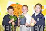 From left: Ben Foley, Cian Canavan and Ciara Lynch shoing off what they've grown at the Caherleaheen National School Harvest Fest.