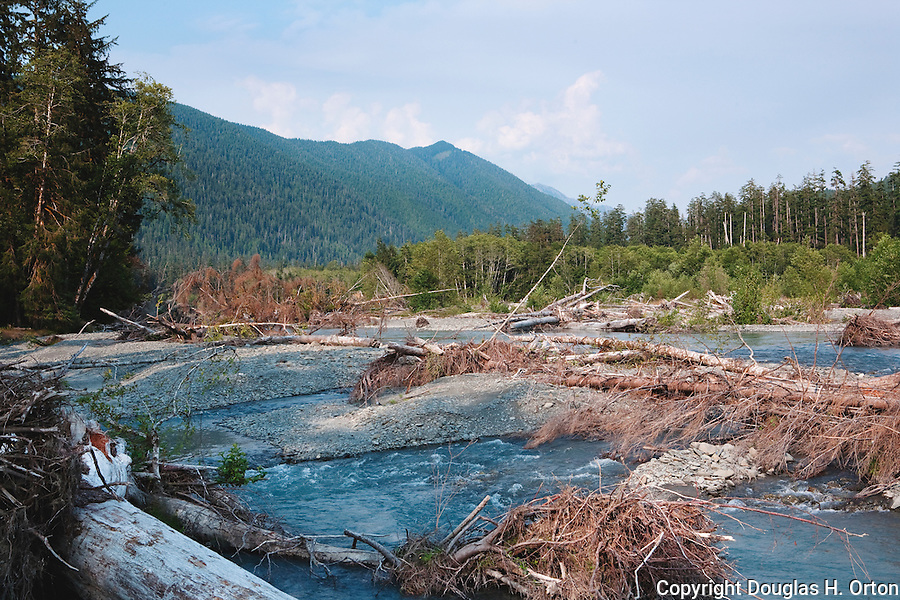 The Hoh River, known for salmon and steelhead fishing, hiking and rafting, provides a glimpse at where driftwood originates.  Olympic Penninsula, Washington.  Outdoor Adventure. Olympic Peninsula