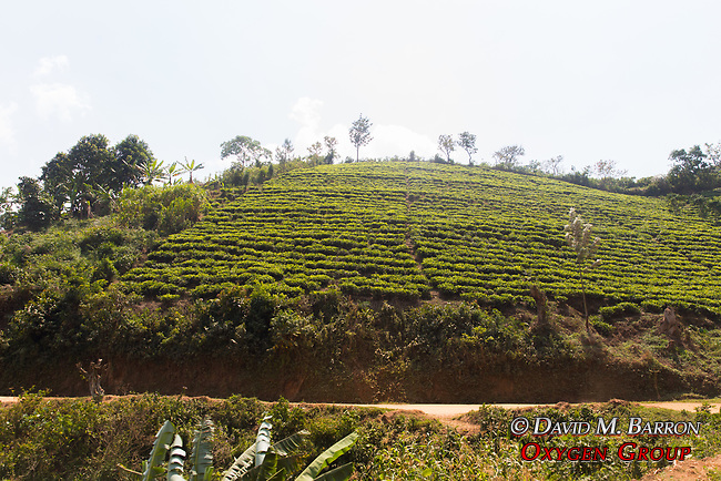 Cultivated Hillside