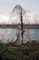 """Il fiume Adda presso Rivolta d'Adda (Cremona). Piante in """"danza"""" tra rifiuti --- The river Adda near Rivolta d'Adda (Cremona). Dancing like plant among garbage"""